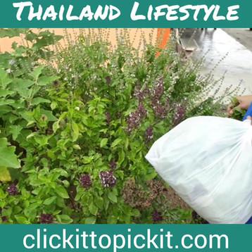 Picking Basil and Eggplant.mp4