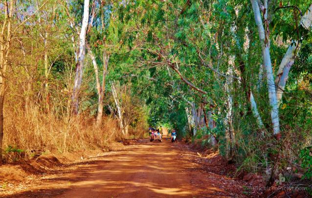 Rural Road in Buriram Province