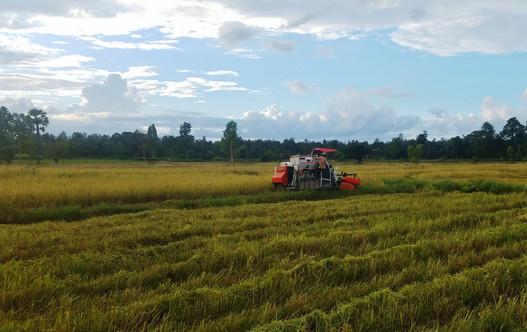 Thailand Rice Harvest.jpg