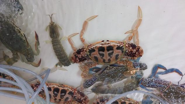 Crabs at Bang Po Market