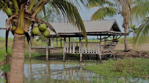 Fish Pond Coconuts Thailand.JPG