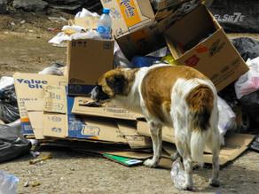Buscan reducir aumento de animales callejeros en Tuxtla