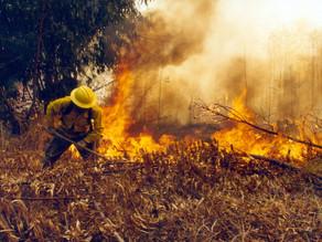 Carranza, Arriaga y El Parral se ubican como los más afectados por incendios