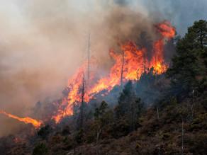 Incendio forestal en Coahuila y Nuevo León acumula 12.000 hectáreas afectadas