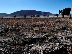 La sequía golpea al agro mexicano y anticipa una menor producción