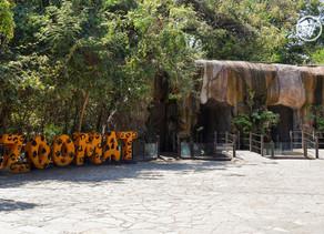 Dan luz verde para reapertura del zoológico