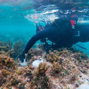 El gran desafío del rescate de los arrecifes del Caribe mexicano