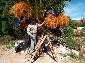 Al rescate de un paraíso en Oaxaca