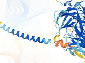 Crean el mapa más completo de proteínas humanas: será público y gratuito
