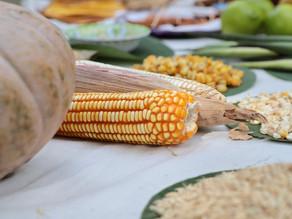 Arranca temporada de comercialización de granos chiapanecos