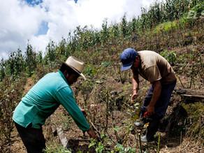 SAGYP asegura que ayuda al campo sí ha fluido; campesinos señalan que no hay  gestiones