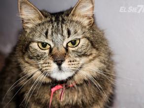 ¿Es bueno o malo acariciar a los gatos?