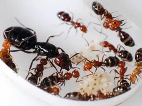 Un algoritmo inspirado en los caminos descartados por las hormigas