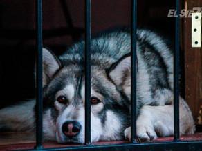 Chiapas, sexto lugar en crueldad animal