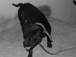 El cadejo: La gente que se convierte en el perro negro