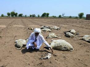 Ola de calor en India deja más de 40 muertos
