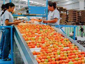El superávit agroalimentario de México supera los 10.000 millones de dólares