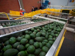 El superávit agroalimentario crece un 30,9 % anual hasta agosto