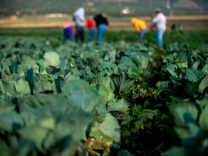 El superávit agroalimentario de México crece un 21,4 % de enero a julio