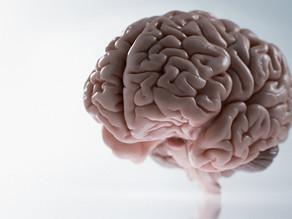 Los cerebros de las mujeres tienen más actividad que los de los hombres