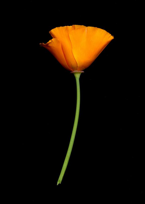 FlowersScan_20_016.jpg