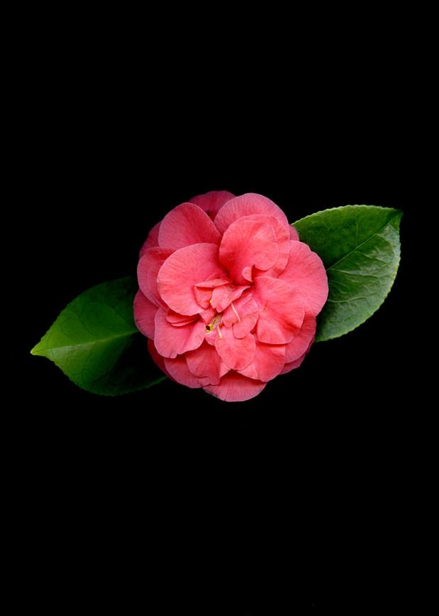 FlowersScan_20_037.jpg