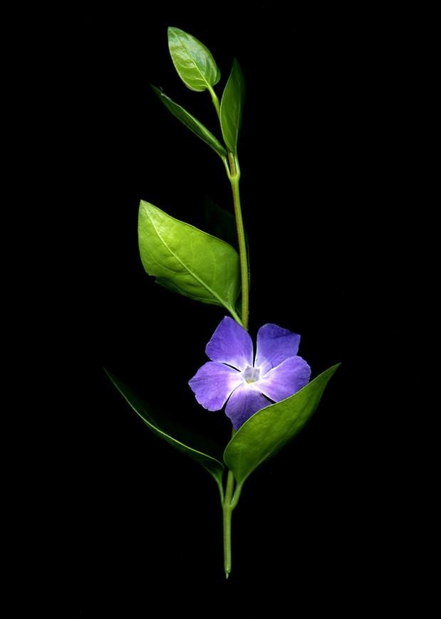FlowersScan_20_085.jpg