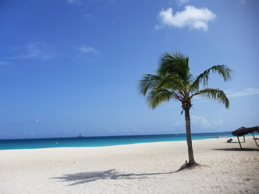 Palm tree on Eagle Beach, Aruba