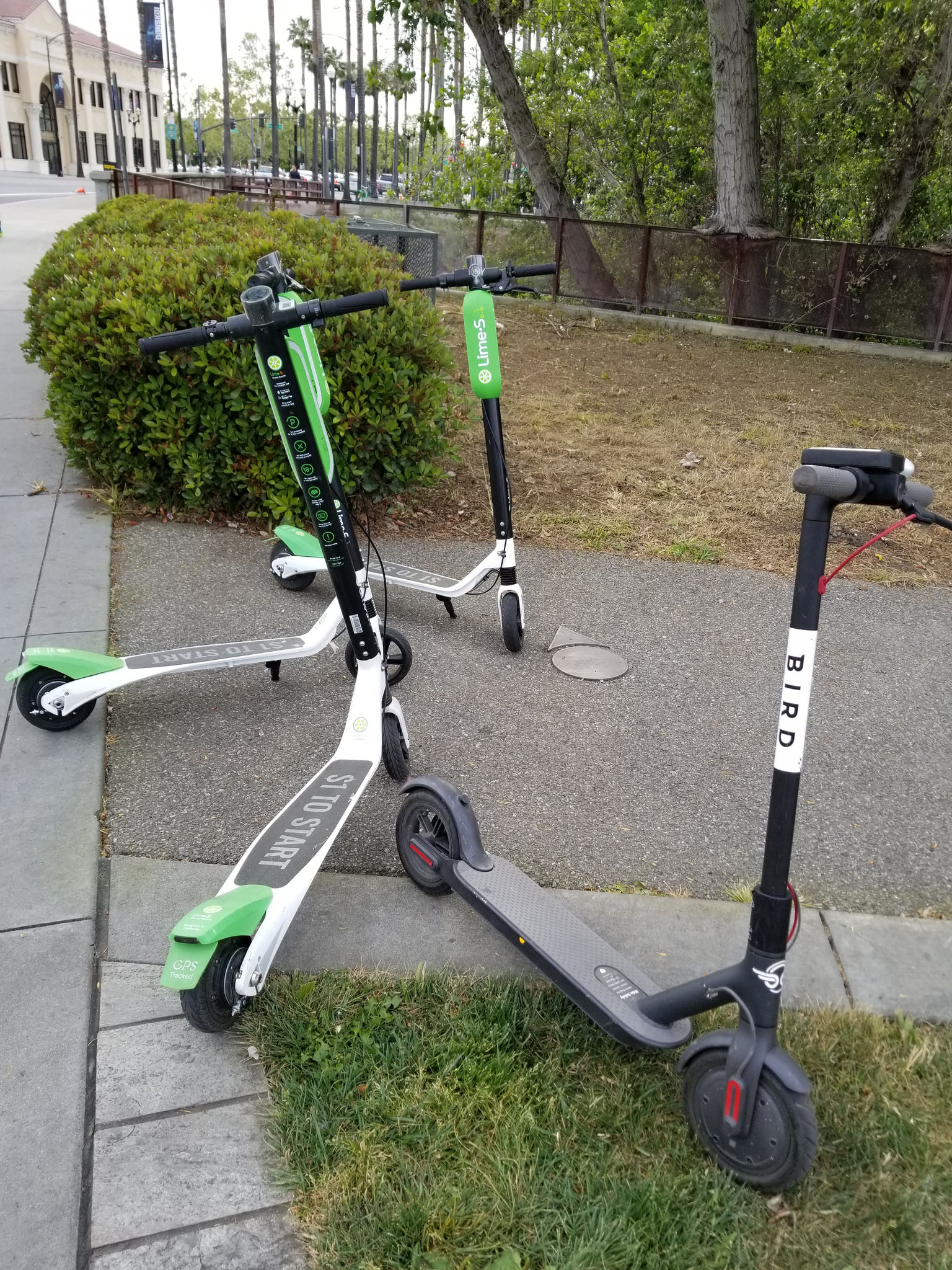 Review Which Is Better Lime Or Bird Electric Scooters Updated 12
