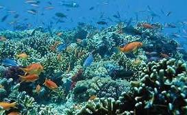 Blue Lagoon Snorkel & Lunch
