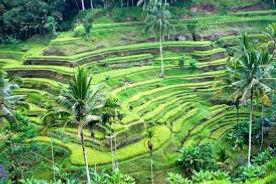 ubud hills.jpg