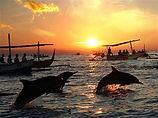 lovin a dolphins.jpg