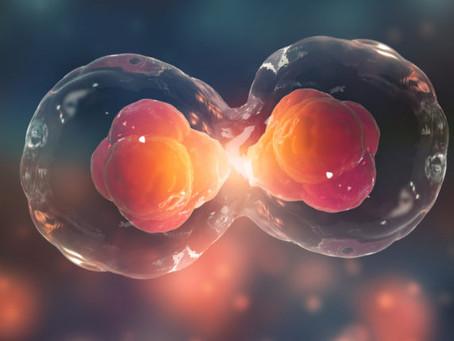 5 dúvidas sobre Reprodução Humana