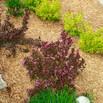 cedar-mulch-plants.jpg