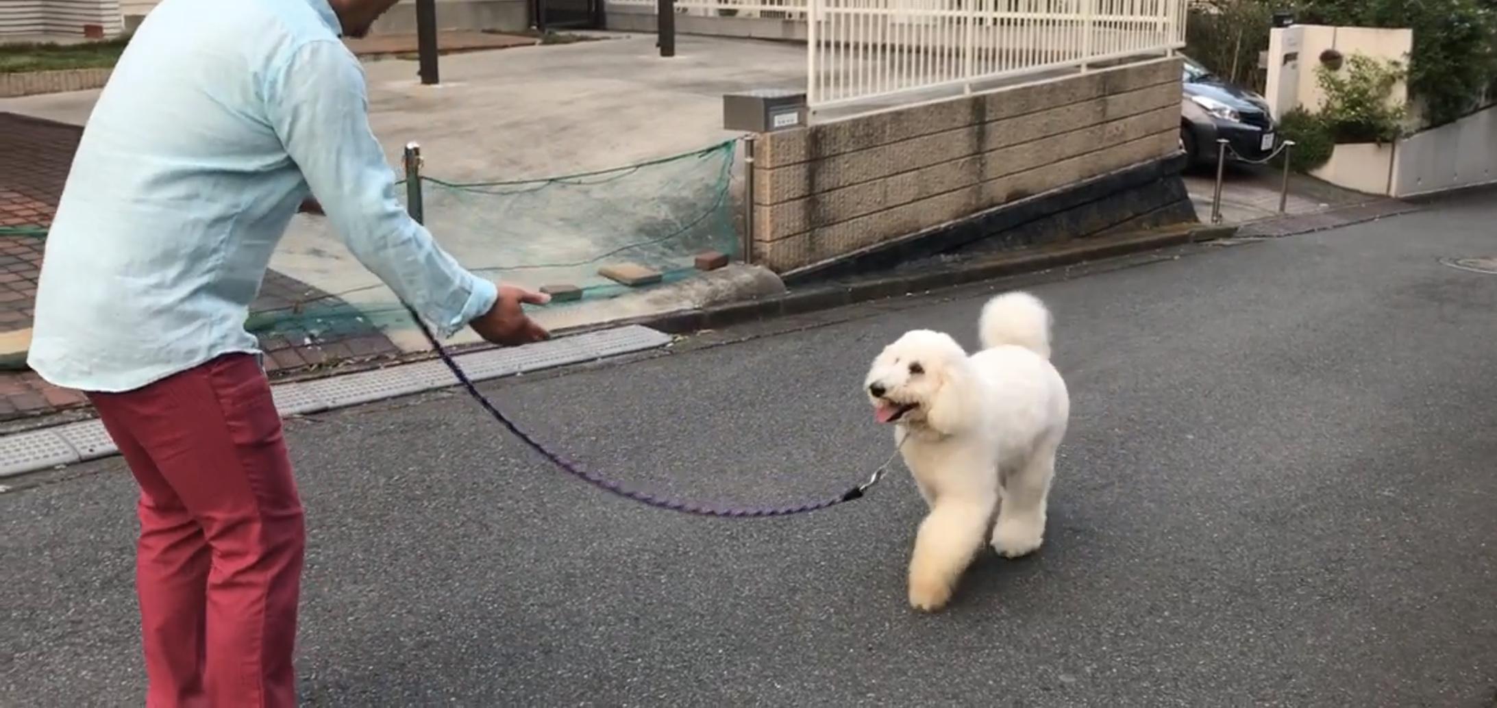 大型犬のリードワーク