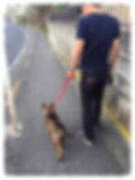 鎌倉ドッグトレーニング 湘南ドッグトレーニング 七里ヶ浜鎌倉ドッグトレーニング 湘南ドッグトレーニング 七里ヶ浜