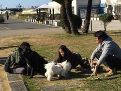 辻堂海浜公園にゲスト犬と一緒に