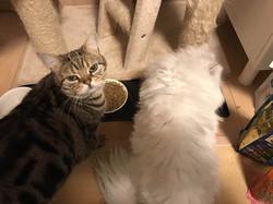 ペットシッティングの猫ちゃん