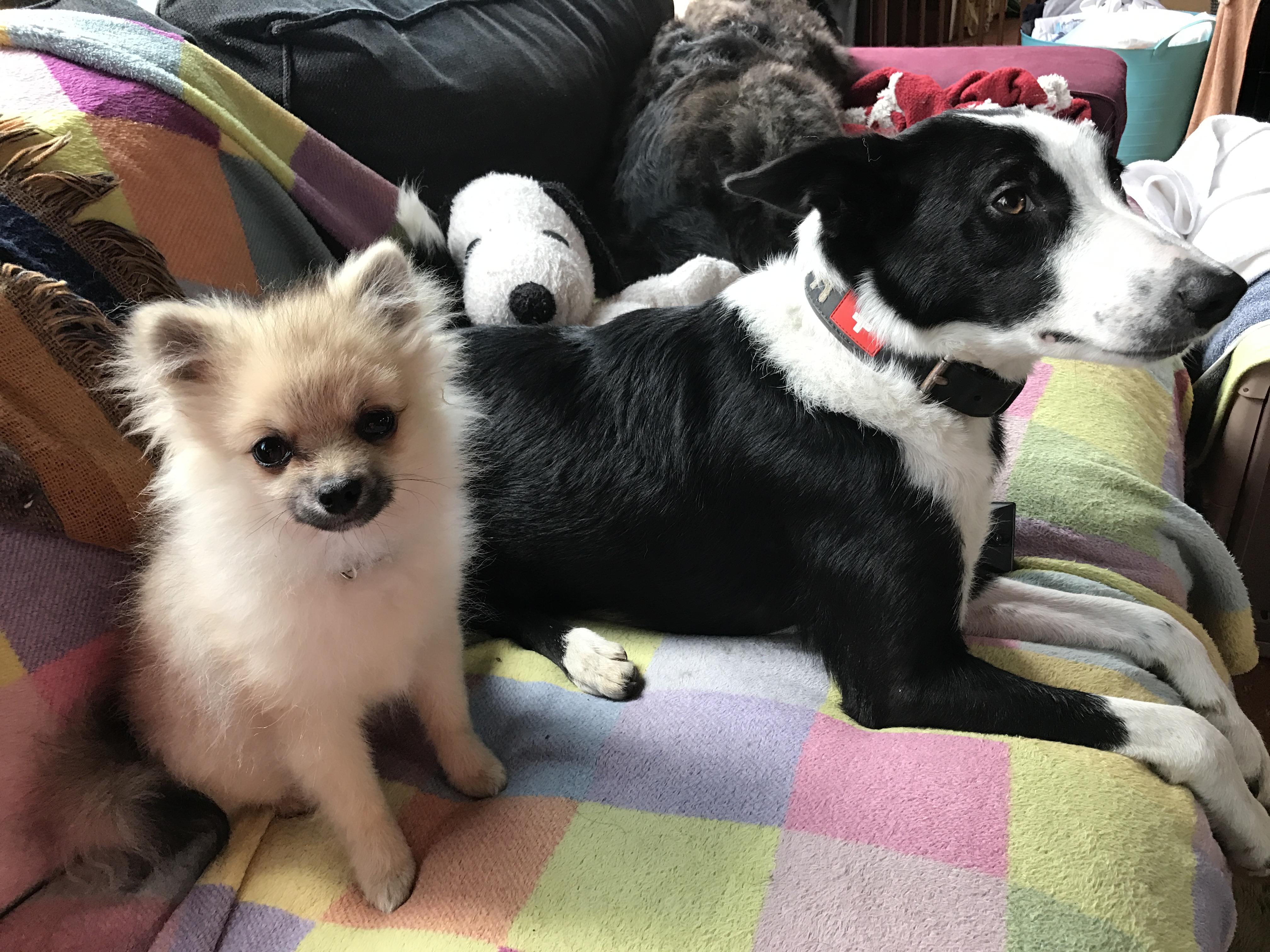 先住犬のエリンの横に!