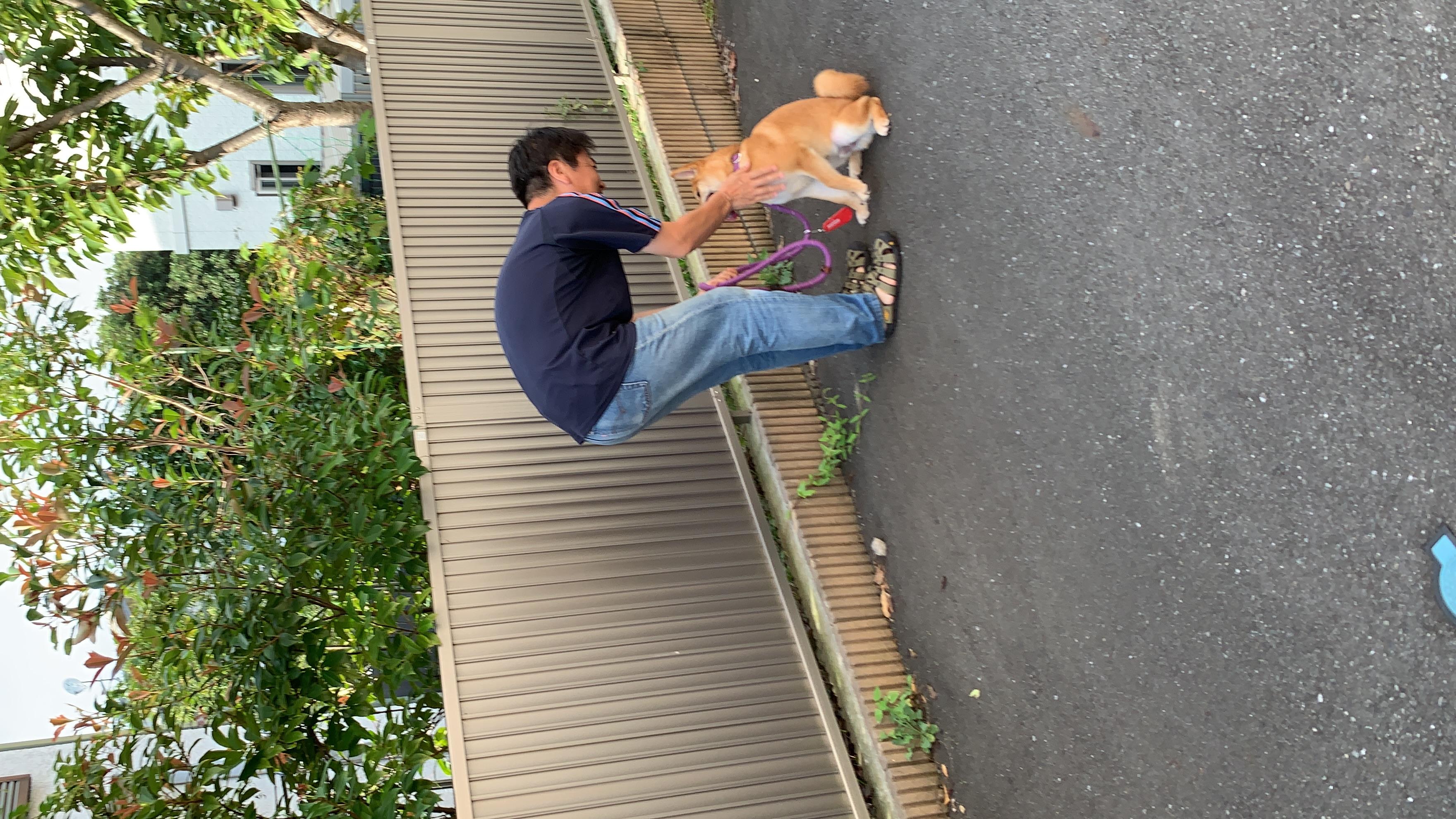 柴犬 ダリアちゃん
