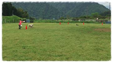 鎌倉ドッグトレーニング 湘南ドッグトレーニング 七里ヶ浜