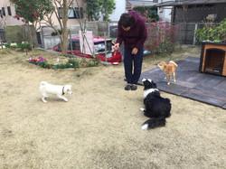 外犬の訓練中