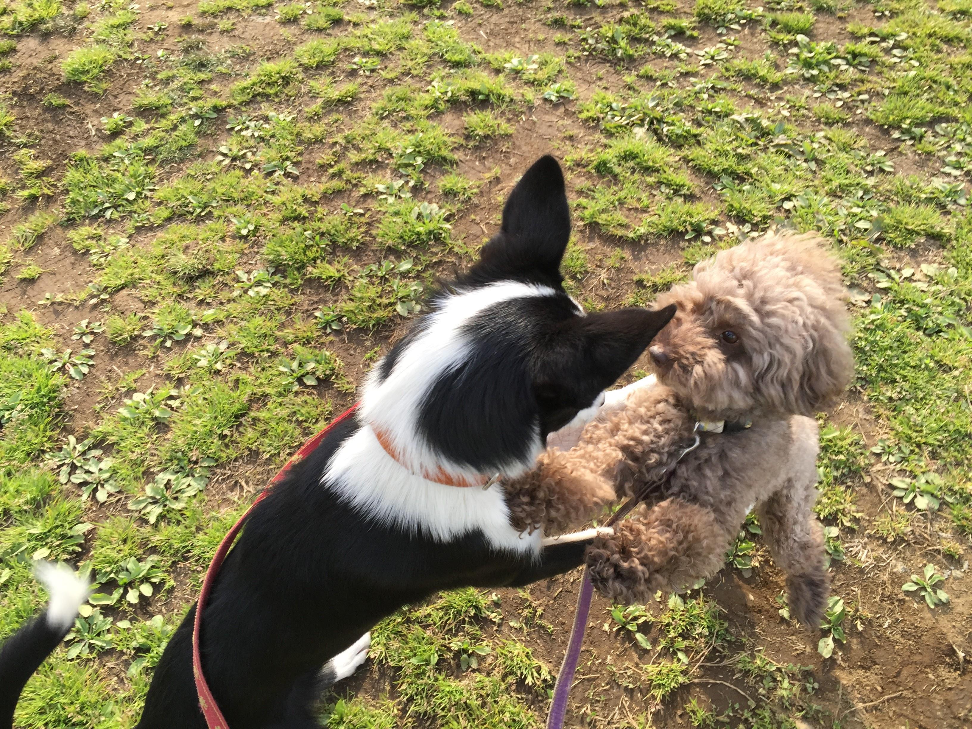 エリンと お預かり犬