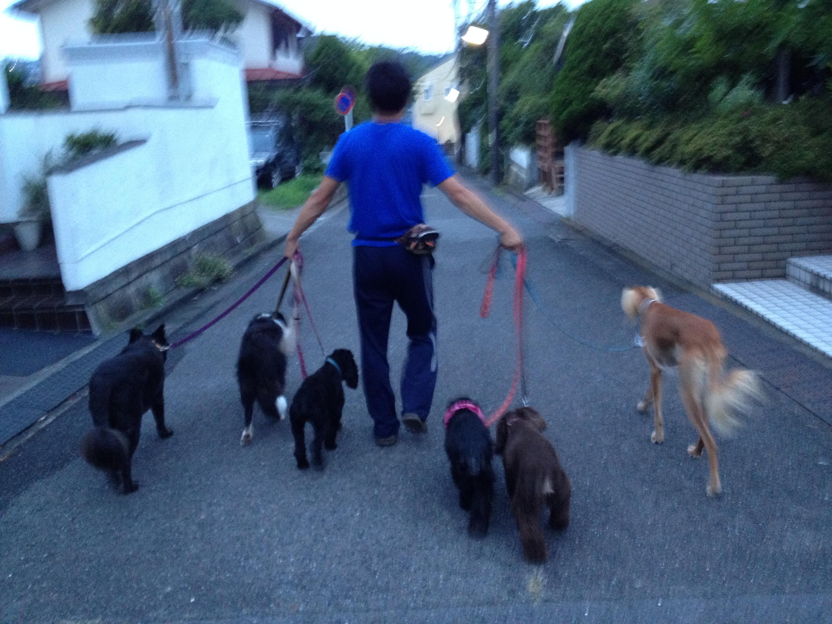 イリスちゃんみんなと散歩