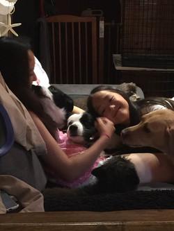 ラブラドールのユメちゃん♀と先住犬