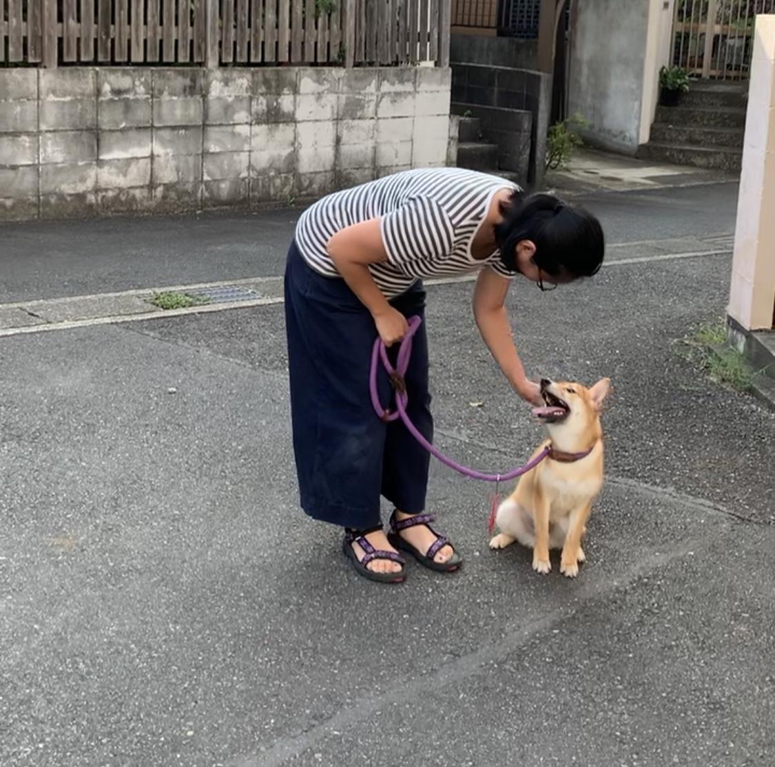 柴犬 ダリアちゃんとママ
