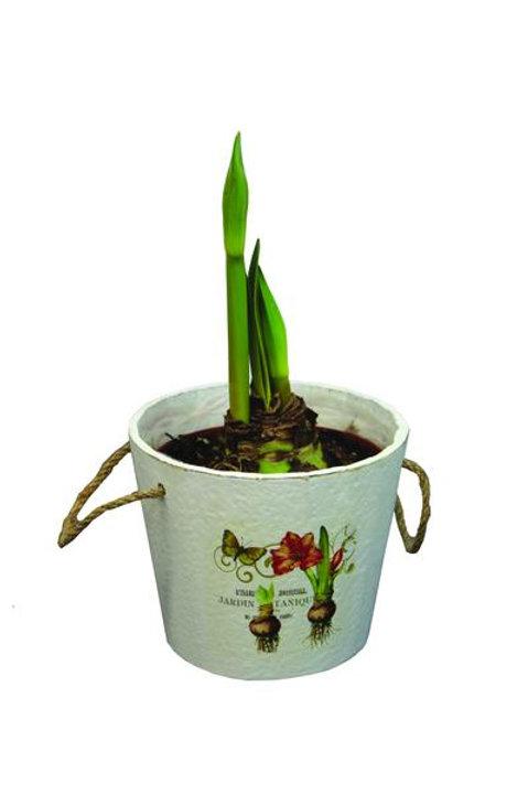 Vintage Botanical Amaryllis Kit