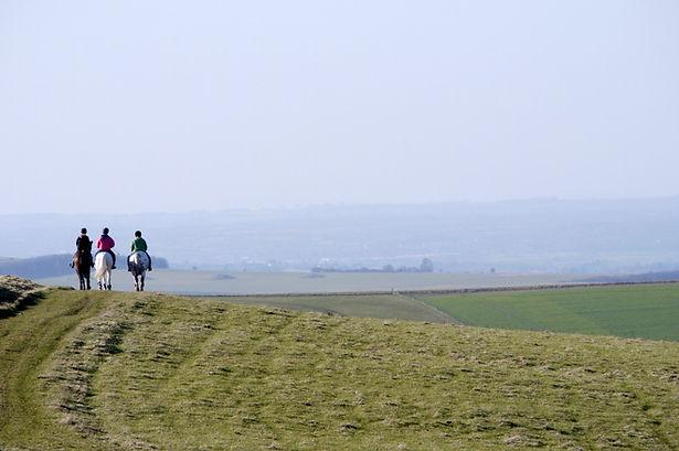 three-horses-in-field-980.jpg