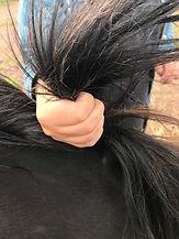Hand holding pony's mane
