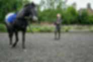 karele horse riding school